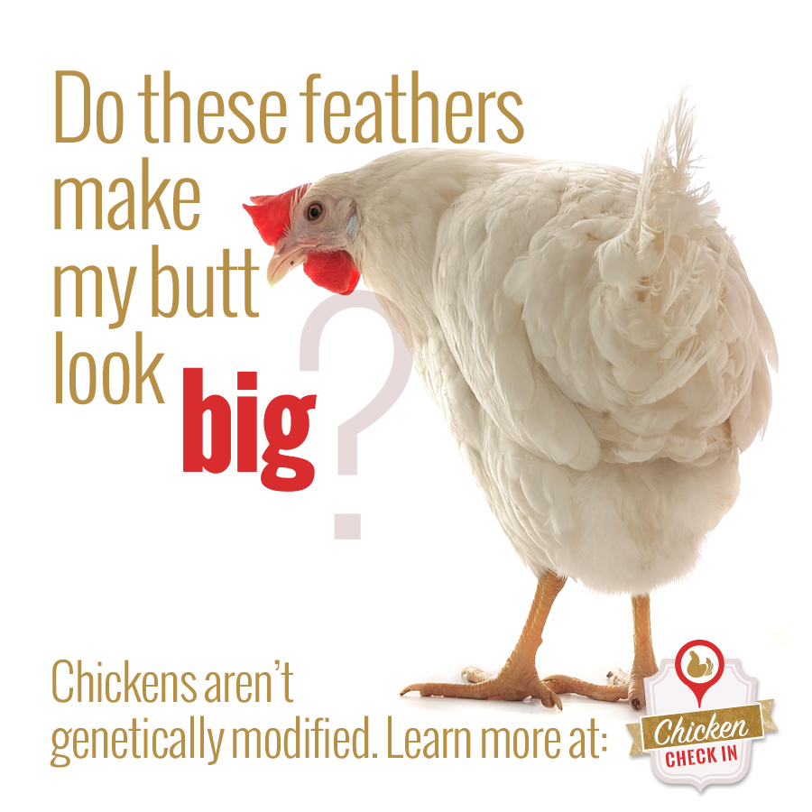 Chicken aren't genetically modified.