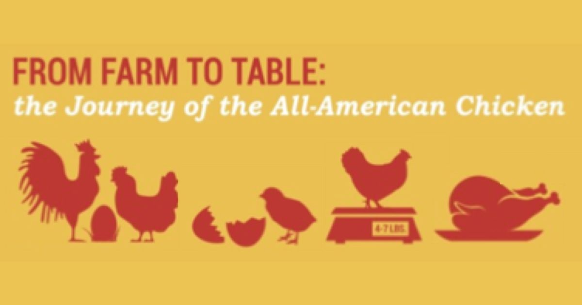 Farm to Table | Chicken Check In