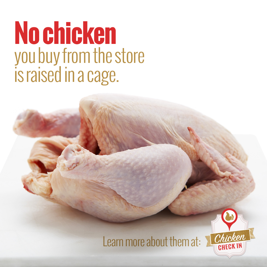 Are broiler chickens raised in cages?