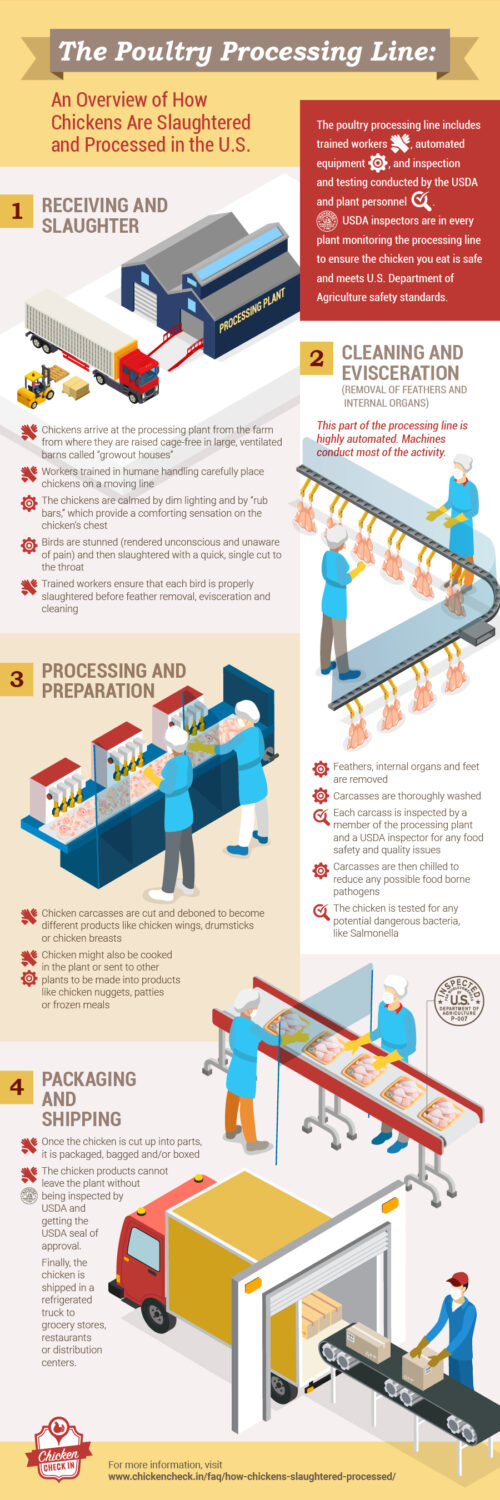 An infographic on the poultry processing line, which shows how chickens are slaughtered and processed in the U.S.